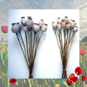 Maková kytičky - sušené makovice